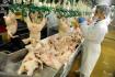 Drůbežárna, kuřata, výroba/produkce - ilustrační foto.