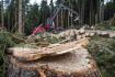 Ilustrační foto - Těžba dřeva, klády, polom, lesní hospodářství - ilustrační foto.