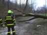 Silný vítr přešel přes východ Česka, lámal stromy a omezil dopravu