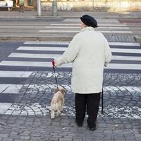 Ilustrační foto - Seniorka se psem na přechodu pro chodce, důchodkyně - ilustrační foto.