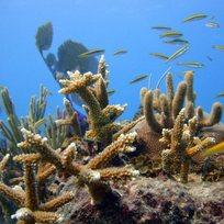 Korál mořský - ilustrační foto.