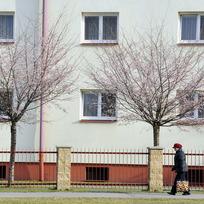 Ilustrační foto - Teplé zimní počasí, kvetoucí stromy - ilustrační foto.