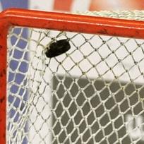 Lední hokej - gól - ilustrační foto