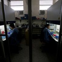 Testy v laboratoři zkoumají přítomnost viru zika.