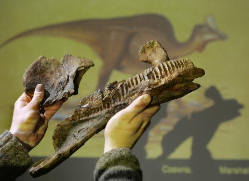 Paleontologové objevili nový druh dinosaura, který žil před 72 miliony let na mexickém pobřeží. Dinoasaurus nazvaný Velafrons coahuilensis měl na hlavě kostěný hřeben ve tvaru plachty, přežvykoval rostliny a snažil se vyhýbat svému bratranci tyranosaurovi. Jeho zkamenělé pozůstatky objevil mezinárodní tým paleontologů v severomexickém státě Coahuila. - ilustrační foto