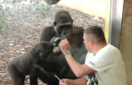 Bývalý chovatel pražské zoo Marek Ždánský (vpravo) navštěvuje Moju, první narozenou gorilu v ČR, ve španělském parku Cabárceno každý rok. Moja sem byla z Prahy převezena před pěti lety a stala se zde matkou samičky Duni. Téměř dvanáctiletá Moja svého bývalého chovatele poznává, i když Ždánský přichází ke sklu mezi běžnými návštěvníky. Oba s Duni na snímku z 13. dubna 2015.
