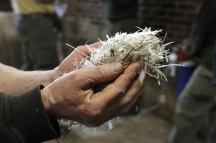 Zoologové v zoo ve Dvoře Králové uřízli roh samci nosorožce bílého jižního Pamirovi (na snímku jsou piliny z rohoviny vzniklé při odřezávání rohu).