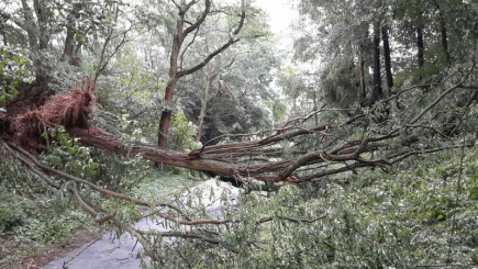 V Olomouckém kraji byly v noci na 11. srpna a časně ráno další silné bouřky. Na snímku vyvrácený strom v Medlově.