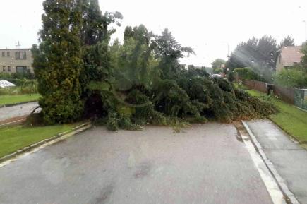 Hasiči v Pardubickém kraji museli 11. srpna v noci a ráno vyjíždět na desítky míst, aby likvidovali následky bouřek. Nejčastěji museli odstraňovat spadlé stromy a větve. Postižena byla zvláště východní část regionu, Orlickoústecko a Svitavsko.