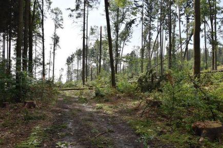 V Olomouckém kraji byly 11. srpna v noci a časně ráno další silné bouřky. Na snímku polámané stromy u Šternberka.