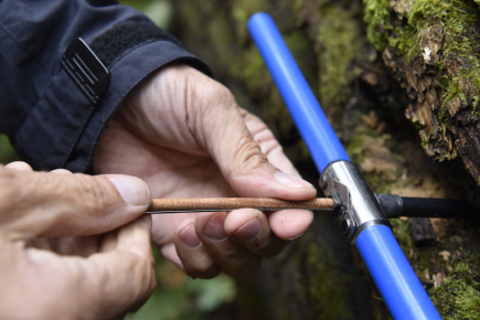 Dendrochronolog Josef Kyncl odebíral 7. září vzorky z pravděpodobně nejstaršího dubu v oboře Soutok u Lanžhota na Břeclavsku. Strom leží v Národní přírodní rezervaci Cahnov-Soutok a spadl údajně v roce 1963. Jeho stáří se předběžně odhaduje na 400 let a více. Na snímku Josef Kyncl vytahuje vzorek dřeva ze speciálního vrtáku.