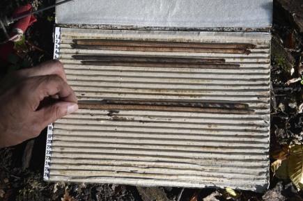 Dendrochronolog Josef Kyncl odebíral 7. září vzorky z pravděpodobně nejstaršího dubu v oboře Soutok u Lanžhota na Břeclavsku. Strom leží v Národní přírodní rezervaci Cahnov-Soutok a spadl údajně v roce 1963. Jeho stáří se předběžně odhaduje na 400 let a více. Na snímku odebrané vzorky uložené ve speciálním pořadači.