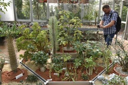 Výstava kaktusů a sukulentů, letos zaměřená zvláště na druhy z Mexika a Afriky, začala 8. září v brněnské Botanické zahradě Přírodovědecké fakulty Masarykovy univerzity. Zájemci se mohou těšit například i na takzvané živé kameny či smrdutky. Výstava potrvá do 15. září.