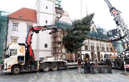 Specializovaná firma nainstalovala 12. listopadu na Horním náměstí v centru Olomouce vánoční strom. Dvanáctimetrový, 55 let starý smrk letos pochází z Postřelmova na Šumpersku z pozemku Márie Kloučkové.