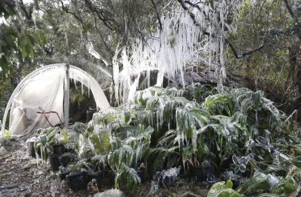 Zmrzlé stromy a rostliny v Panama City Beach na Floridě.