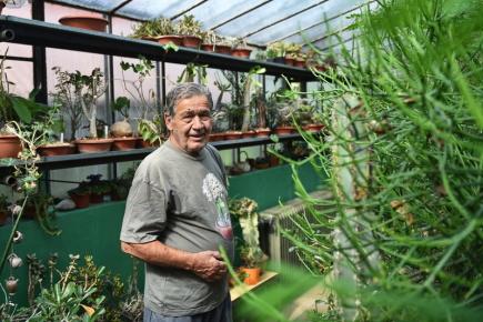 Přes půlstoletí pěstuje v Českých Budějovicích kaktusy a sukulenty Petr Říha (na snímku z 9. července), jenž má i 240 let starou rostlinu, kterou vlastnil cestovatel Alberto Vojtěch Frič.