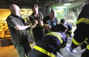 Zaměstnanci brněnské zoologické zahrady stěhovali 10. října za účasti hasičů do nové expozice tři anakondy velké.