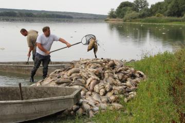 V rybníku Nesyt na Břeclavsku kvůli horkému počasí, které způsobuje nedostatek kyslíku ve vodě, a nedostatku vody uhynuly desítky tun ryb (na snímku z 10. srpna 2018).