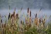 Ilustrační foto - Podzimní ráno. Ilustrační foto.