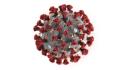 Ilustrační foto - Nový typ koronaviru, který je označován jako 2019-nCoV, na ilustračním snímku Centra pro kontrolu a prevenci nemocí.