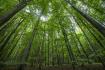 Les, stromy - ilustrační foto.