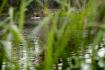 Přírodní koupliště, rybník - ilustrační foto.