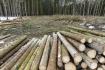 Ilustrační foto - Vytěžené dřevo - ilustrační foto.