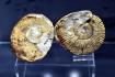 Zkamenělé trilobityve zmodernizované expozici Moravského zemského muzea nazvané Zaniklý život Moravy na snímku pořízeném 24. srpna 2021 v Dietrichsteinském paláci v Brně.