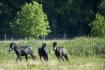 Šest divokých koní obývá od 14. září 2021 celou bezmála čtyřiadvacetihektarovou plochu nové přírodní rezervace s názvem Meandry Lužnice u Třeboně na Jindřichohradecku. Koně pocházejí z rezervace u středočeských Milovic.