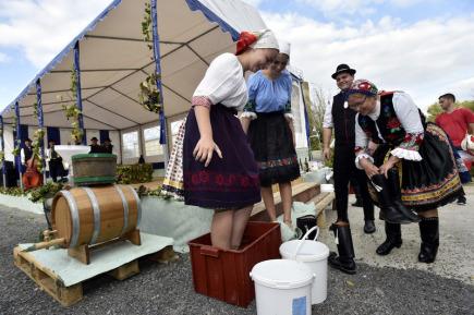 V Boršicích na Uherskohradišťsku uspořádali 30. září místní vinaři folklorní akci zvanou Šlapání hroznů dívčí nohou. Jde o obnovenou tradicí získávání vinného moštu, kterou v současné době nahradilo mechanické lisování. Odhalen byl také historický kládový lis z roku 1883.