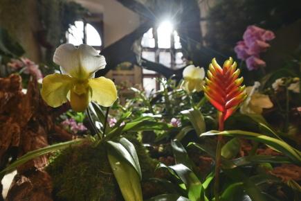 V Jihočeském muzeu v Českých Budějovicích dokončovali 15. února před večerním zahájením instalaci výstavy přibližně tisícovky orchidejí, bromélií, sukulentů a jiných exotických rostlin. Akce nabídne od 16. února exponáty, jejichž součástí budou drobná živá zvířata, které se vyskytují v různých světadílech. Výstava potrvá do 25. února.
