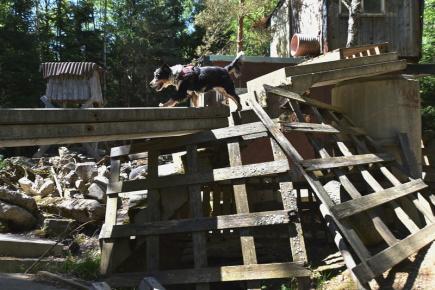 V pátrání v lese, v sutinách a po pachové stopě soutěžili 6. května 2018 kynologové se svými psy v Přední Výtoni na Českokrumlovsku, kde se koná třídenní mezinárodní závod Itercup Humanity. Na snímku hledá figurantku fenka Bessy.