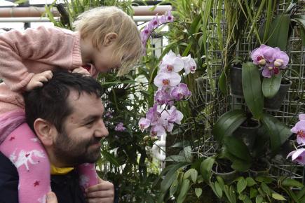 V Brně vystavují do pondělí orchideje a exotické rostliny 7fc245a56a