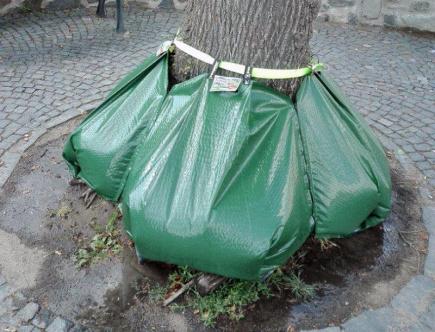cc5621c325 V Novém Boru testují novou metodu zavlažování stromů v ulicích
