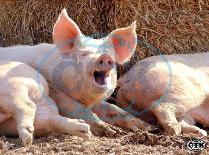 I zvířata mají svá práva II.  5ebf0ddacd