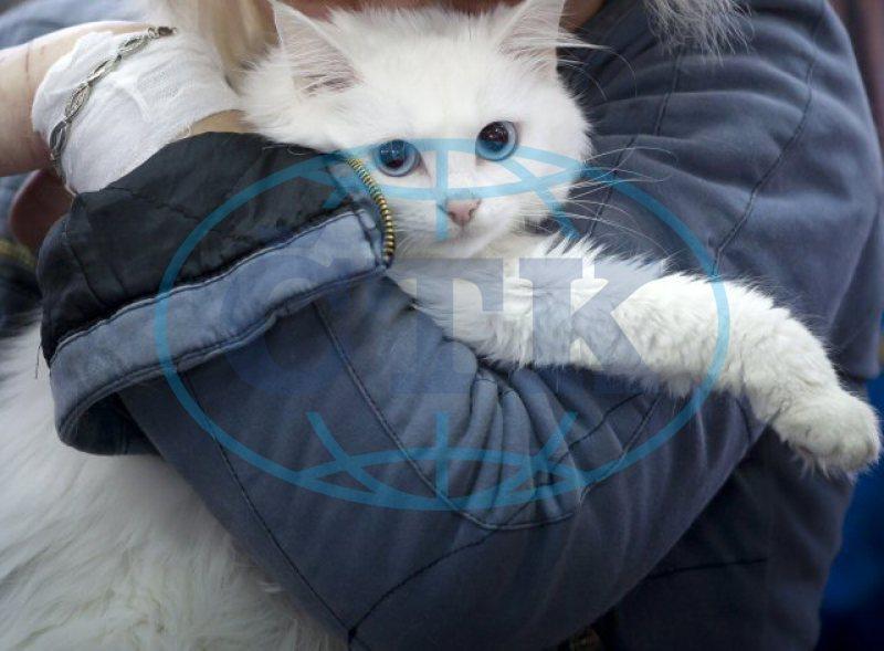 Obrázky těsné kočičky