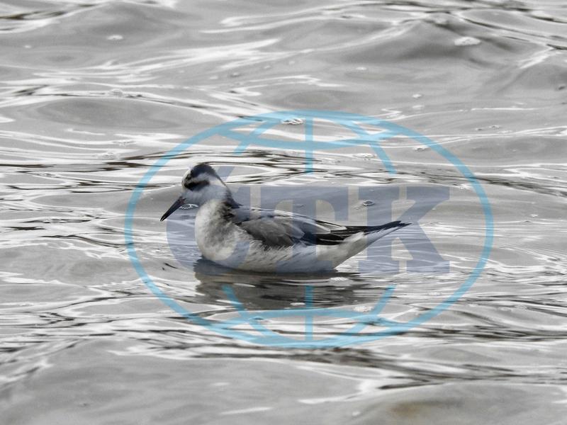 pták obrázky
