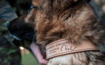 Ministr obrany Vlastimil Picek ocenil 7. ledna v Chotyni na Liberecku německého ovčáka Athose zraněného při misi v Afghánistánu.