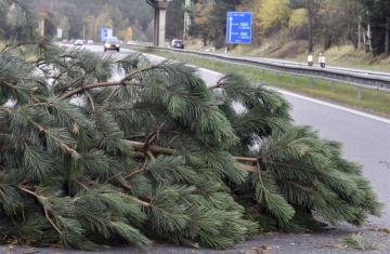 Ilustrační foto - Silný vítr zasáhl 29. října 2017 většinu území České republiky včetně Vysočiny. Na dálničním přivaděči u Jihlavy spadly dvě borovice na vozovku a zatarasily jeden jízdní pruh.