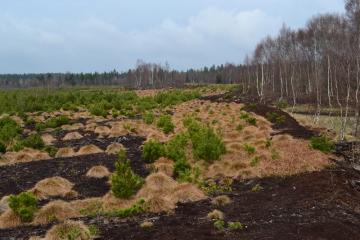 Lesy ČR zahájily nejrozsáhlejší obnovu rašeliniště (na snímku) v Krušných horách. Přirozená tvorba rašeliny se vrátí na 66 hektarech Perninského rašeliniště při silnici z Perninku do Abertam. Do úprav investují Lesy ČR 7,7 milionu korun. Díky obnově původních přírodních podmínek, která začala 1. srpna 2018, krajina opět zadrží vodu a vrátí se i typická vegetace a živočichové.