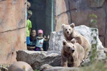 Jihočeská zoologická zahrada Hluboká nad Vltavou pokřtila 29. srpna 2018 vzácného medvěda plavého, který se zde narodil 1. ledna 2018. Medvídě vážící 35 kilogramů dostalo jméno Bílý dráp. Jde o kriticky ohrožený druh, v budoucnu ho zoo chce umístit do nějaké renomované zoologické zahrady. Na snímku je mládě (vzadu) s matkou.