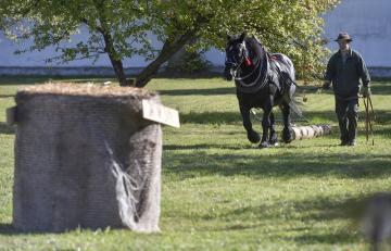 Práci tažných koní v lese a řezání kmenů na pojízdné pile, štípání dřeva, ale i lov pstruhů ve středověkých sádkách nabídl Den venkova 29. září 2018 na zámku Kinských ve Žďáru nad Sázavou.