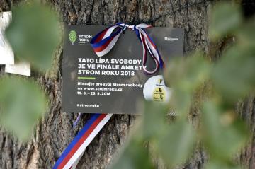 Titul Strom roku 2018 získala lípa z Velkých Opatovic na Blanensku (na snímku z 10. října 2018). Zůstala jako jediná z 16 Stromů svobody, které v Opatovicích vysázeli v roce 1918 na počest vzniku Československa.