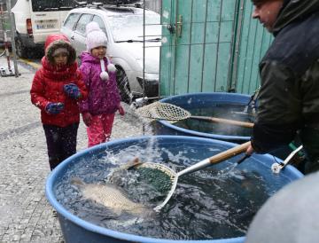 Pracovníci Státní veterinární správy kontrolovali 20. prosince 2018 v Praze předvánoční prodej kaprů. Při kontrolách se zaměřují zejména na zacházení s živými rybami a na hygienické podmínky prodeje.