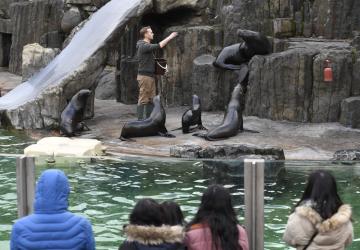 Vánoční program v pražské zoologické zahradě přilákal 24. prosince 2018 téměř šest tisíc návštěvníků. Lidé přinášeli zvířatům jedlé dárky i fotbalové míče na hraní.