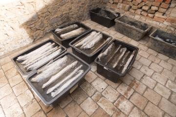 Dřevěné části studny nalezené u Ostrova uložené v konzervačním roztoku na Fakultě restaurování v Litomyšli.
