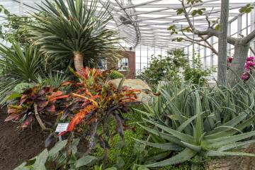 Zahrada léčivých rostlin při Farmaceutické fakultě Univerzity Karlovy (FaF UK) v Hradci Králové pěstuje přes 1000 druhů, včetně více než 300 tropických. Skleníky s tropickými rostlinami jsou vytápěné asi na 25 stupňů Celsia. Na snímku z 8. února 2019 je velký sbírkový tropický skleník.