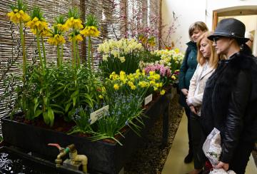 Výstava z cyklu Předjaří na Pražském hradě začala 1. března 2019. Návštěvníkům představí historii Královské zahrady, kde se sedmý ročník výstavy koná.