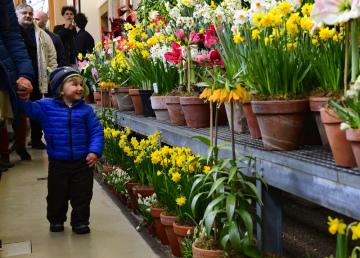 Výstava z cyklu Předjaří na Pražském hradě začala 1. března 2019. Návštěvníkům představí historii Královské zahrady, kde se sedmý ročník výstavy koná. Potrvá do 10. března.