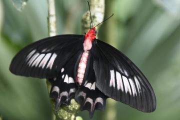 Výstava motýlů v tropickém skleníku Fata Morgana byla zahájena 10. dubna 2019 v Botanické zahradě hl.m. Prahy.